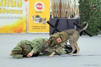 Применение собак в годы Войны
