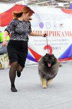 Выставка собак CACIB - Огни Прикамья 2020