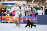 Международная выставка собак - Огни Прикамья 2020